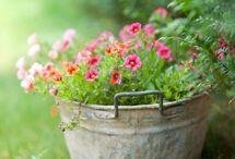 Flowers, plants, pots