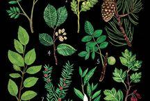 Identifying Botanicals