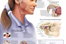 TMJ - Temperomandibular Joint