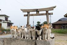 Cats Chats Gatos Neko