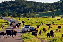 Road Trip to South Dakota  / Historic American landmarks, national parks and scenic byways are only the beginning of your all-American road trip through South Dakota.