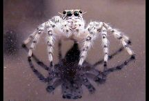 Arachnids and Invertebrates / The creatures I love & Hate