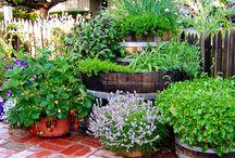 gardening - herbs