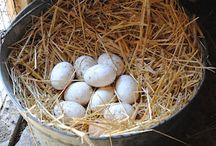 Eggs/Eieren