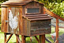 Chicken coop / by Shelley Gibson