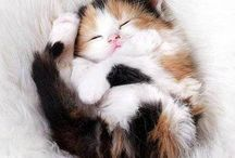Minnoş Kediler