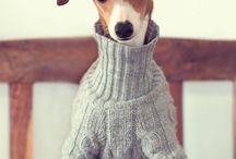 Italian greyhound couture