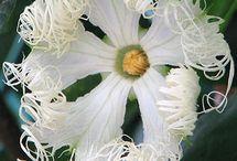 flores exoticas