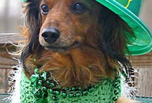 Happy St. Patrick's Day Dogs