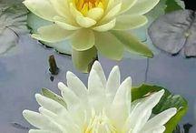 pekná a vodné rastliny