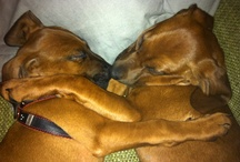 Puppies  / Big Love