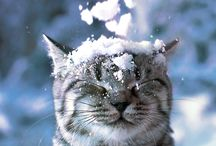 Nature/ Animals / I love Nature and the different kind of weather, :)