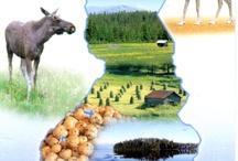 Suomi kuvina