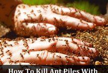 Karınca ve haşere