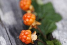 Cloudberry - Lakka / My Favourite