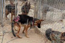 perritos lastimados