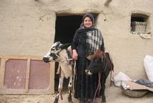Microfinance clients
