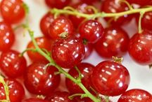 Edible Gardening / All types of food to grow in your garden, or at your allotment.
