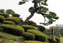niwaki style and pruning