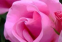 rosas solo rosass