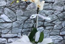 ADANA ÇİÇEKÇİ / ADANA Çiçek Siparişi 55% İndirim CinarCicekcilik® 29TL www.cicekbahcem.com 'u ziyaret edin.  ADANA Çiçek Siparişi her zaman uygun fiyata gönder,  kaliteli hizmet ilkemizle Adana'da Çiçek'de farklı görmeniz için ADANA çiçekçi Çiçek Bahçem. https://www.cicekbahcem.com/adana-cicek-siparisi