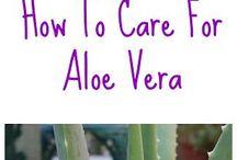 Aloe Vera/Alwyne