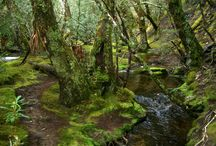 My obsession with moss..... / by Sherri Velliquette