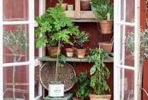 Växter och plantor, växthus, pynt till växterna (hus)