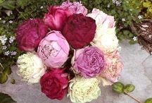 Fabulous Florals / by Carolyn Shmunis