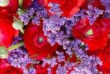 Red and Purple