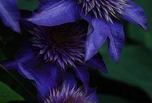 * 紫 *