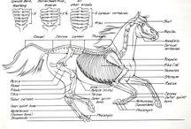 Pferde algemein