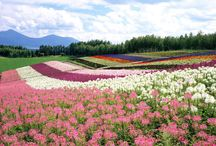 Flowers at the World!