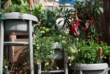 Sustainability/ Permaculture
