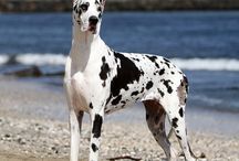 Stunning Dog Breeds