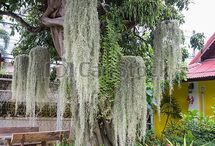 TILLANDSIA / AIR PLANTS South Africa / Fun ideas with air plants (Tillandsia) Tips on growing and caring