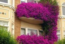 GARDENS & FLOWER WALLS
