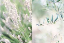 Provence anniversary session
