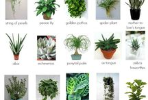 Indoorplant tips