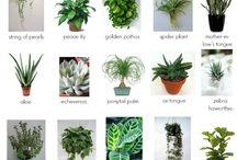 rostliny koupelna