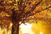 Autumn / by Lindy Muniz