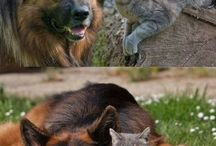 Animals / by Shelby Stachel