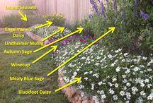 Waterwise Garden Plants