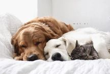 An animals love ❤️❤️.