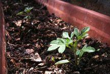 (MOES)TUINIEREN / Hier vind je tips over moestuinieren, tuinieren, duurzaamheid in de tuin, water besparen en eigenlijk gewoon alles wat met de tuin te maken heeft.