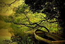 green... / by P Cruickshank-Schott