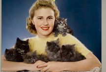 Crazy Cat Lady / Cats and kittehs everywhere / by Vic (Jane Austen's World)