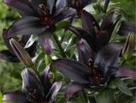 Musta puutarha / Erivärinen puutarha - Garden in strange colours Gootti - Gothic