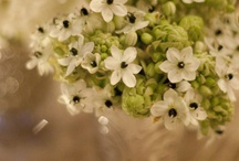 Flowers, plants, herbs ...