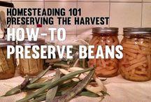 Homesteading 101 - Preserving